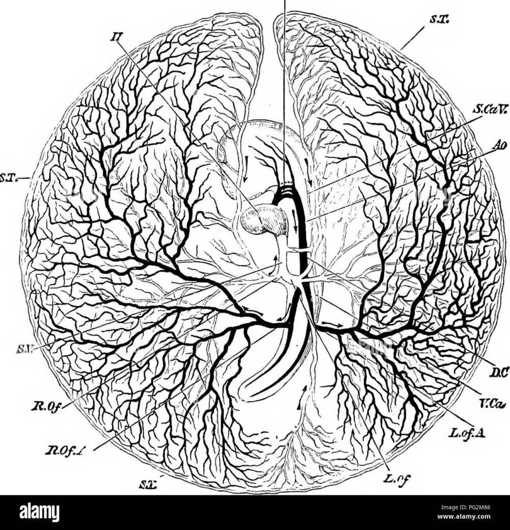 medium resolution of elements of the comparative anatomy of vertebrates anatomy comparative 304 comparative anatomy