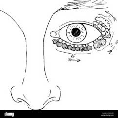 Parts Of The Eyelid Diagram 2006 F150 Mirror Wiring Eyelids Birds Change Your Idea With Design Elements Comparative Anatomy Vertebrates Rh Alamy Com Margin Eye And
