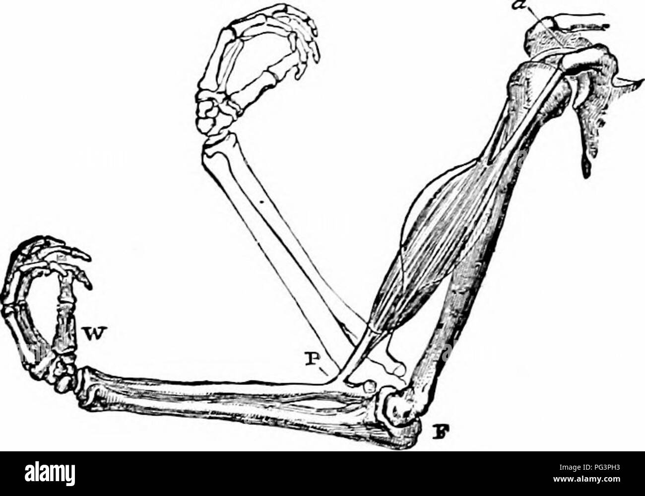 hight resolution of  a manual of zoology the metazoa 67 the account of the protozoa the special study of these constitutes as already pointed out in the introduction
