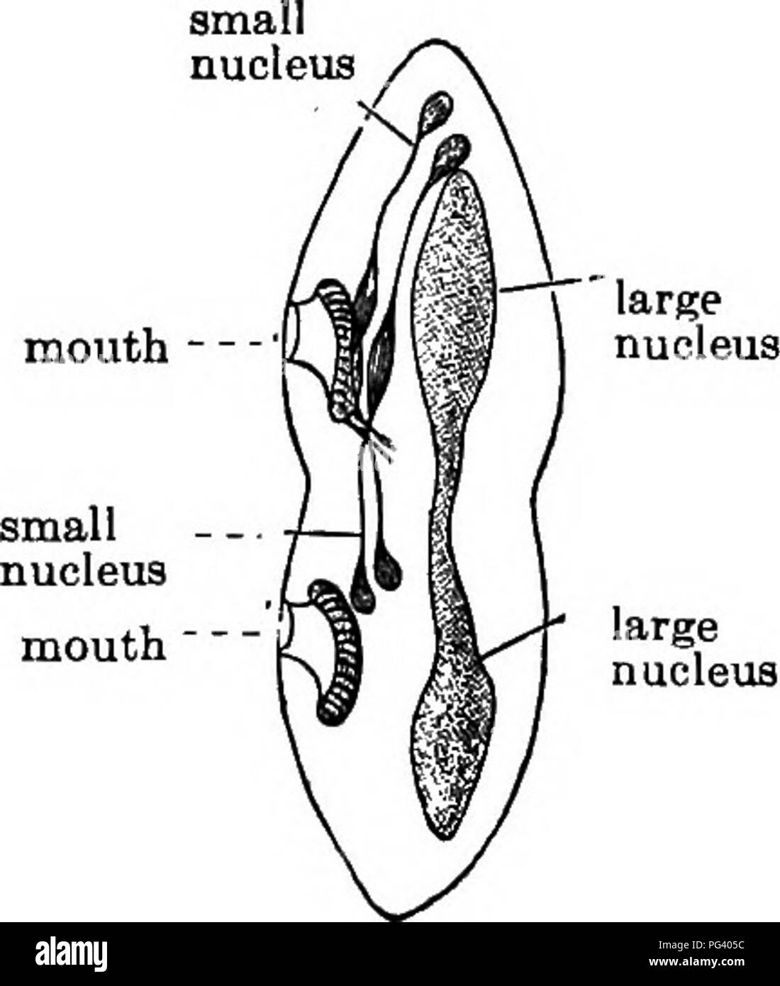 hight resolution of elementary biology animal and human biology paramecium and its relatives 169 and