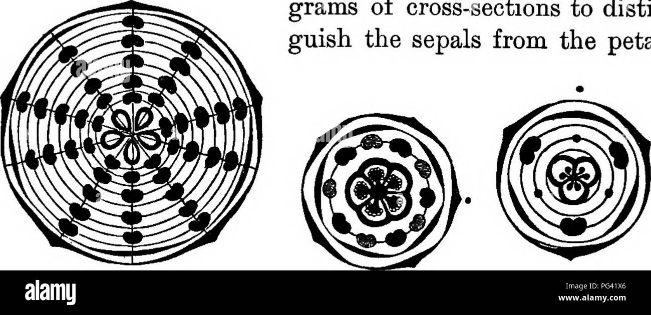 hight resolution of the flower of the higher seed plants 157 a diagram for tlie cross section of the flower of the white water lily of which a partial view of one