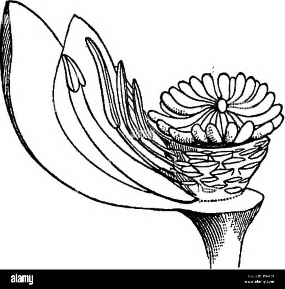 medium resolution of elements of botany botany botany i ii m fig 133