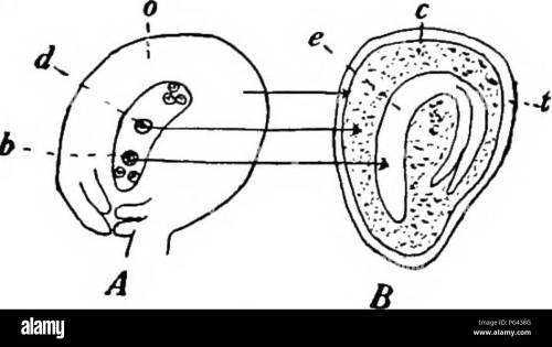small resolution of  botany for agricultural students botany fig 51 stigma of com slow ing how the pollen grains