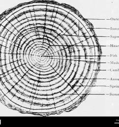 this diagrams shows the annual rings of a tree trunk wiring annual tree ring diagram [ 1300 x 1076 Pixel ]