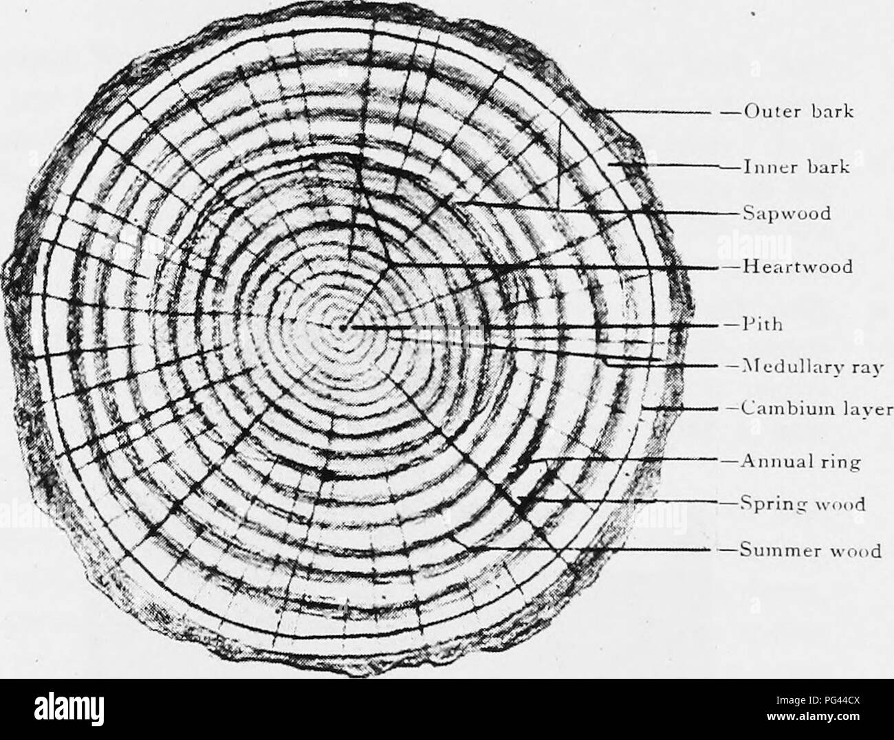hight resolution of this diagrams shows the annual rings of a tree trunk wiring annual tree ring diagram