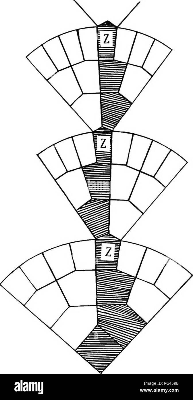 medium resolution of  plant genetics heredity mendel s law plant breeding fig i diagram illustrating weisijann s theory of germinal continuity