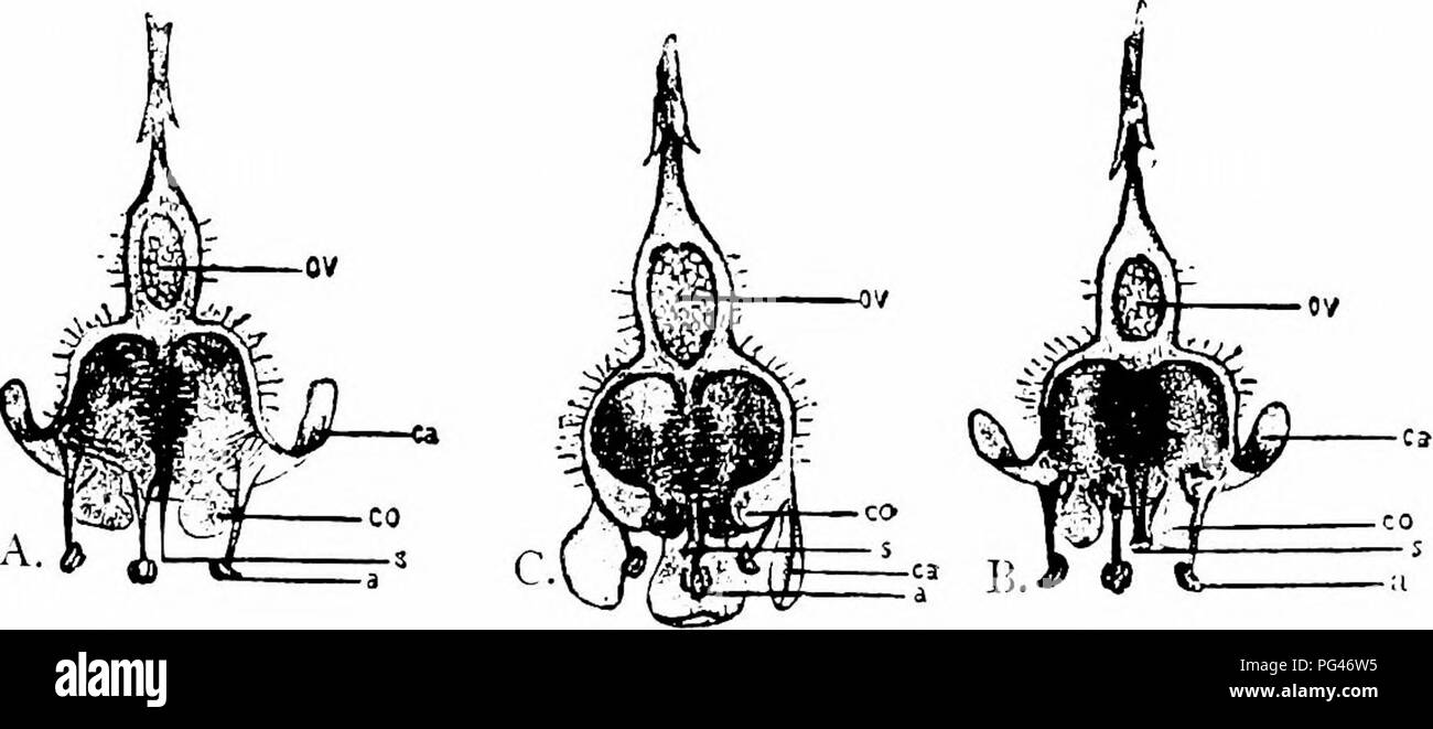 hight resolution of  handbook of flower pollination based upon hermann mu ller s work the fertilisation of flowers by insects fertilization of plants fig 138