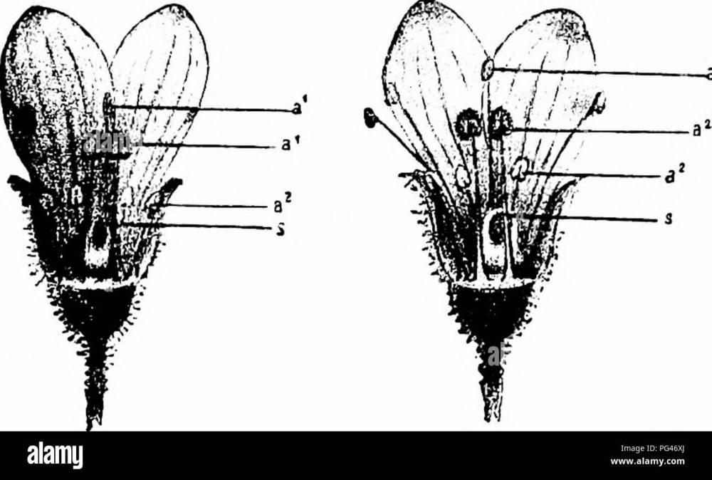 medium resolution of  handbook of flower pollination based upon hermann mu ller s work the fertilisation of flowers by insects fertilization of plants