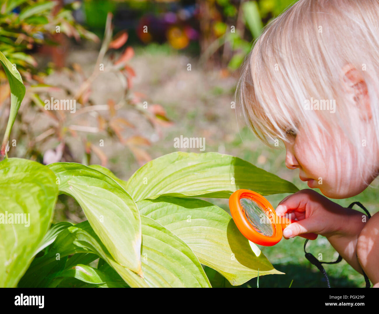 Girl Magnifying Glass Flower Stock Photos Amp Girl Magnifying Glass Flower Stock Images