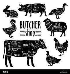 cut of animals meat diagram for butcher meat cut set stock image [ 1300 x 1390 Pixel ]
