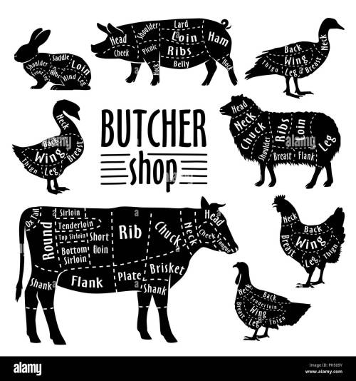 small resolution of cut of animals meat diagram for butcher meat cut set stock image