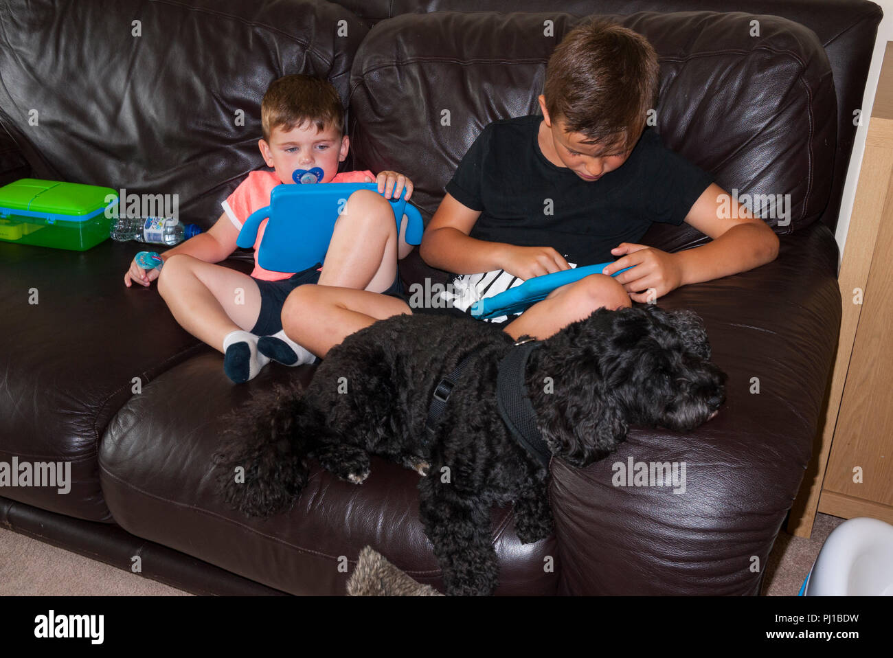 sofa pads uk plum colored two young boys looking at i sitting on a with cokerpoo dog england