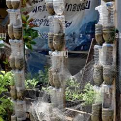 7643d56d5ecf Features Glass Bottles Garden | Gardening: Flower and Vegetables