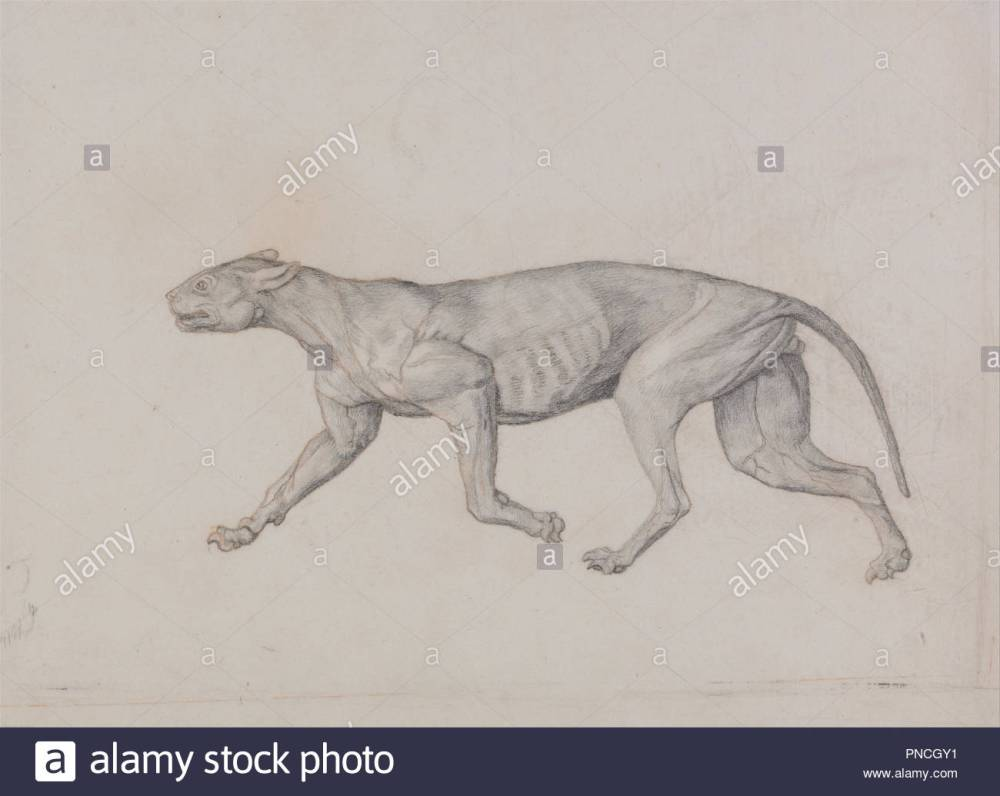 medium resolution of a comparative anatomical exposition of the structure of the human body with that of a tiger and a common fowl leopard body lateral view