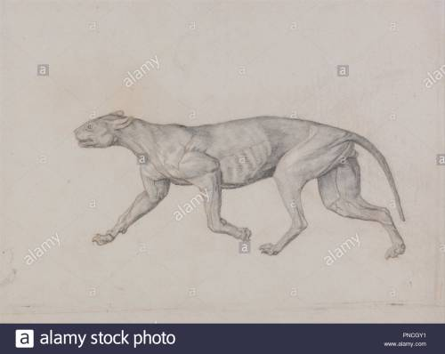 small resolution of a comparative anatomical exposition of the structure of the human body with that of a tiger and a common fowl leopard body lateral view