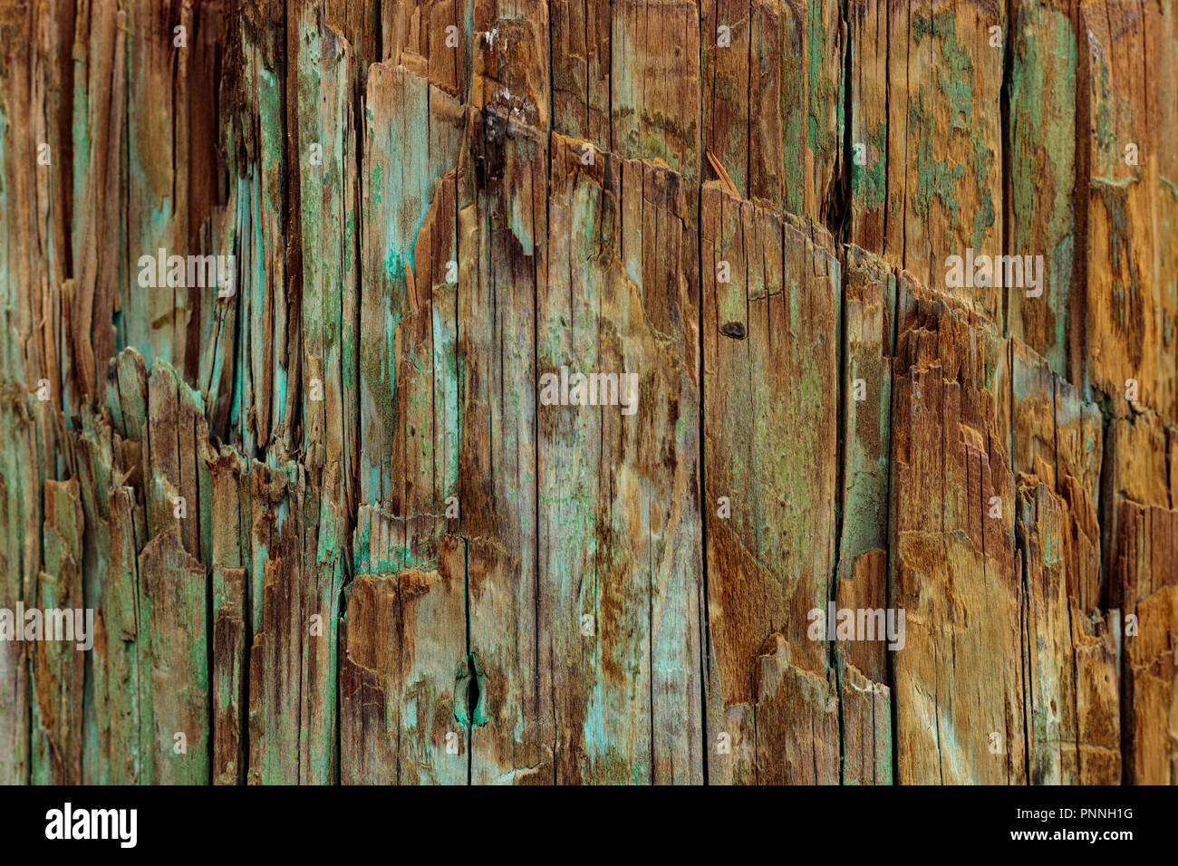 weathered wood background natural