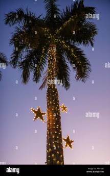 Palm Trees With Christmas Lights Stock &