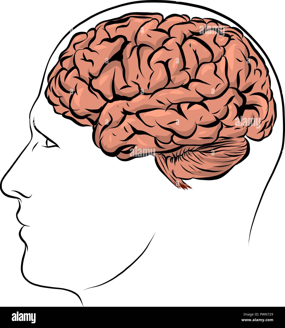 hight resolution of vector human face brown silhouette with brain inside