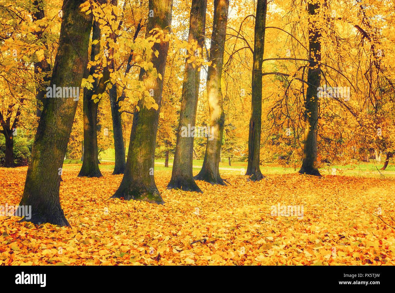 autumn picturesque landscape autumn