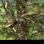 Diy Tree Branch Wall Decor High Resolution Stock Photography And Images Alamy