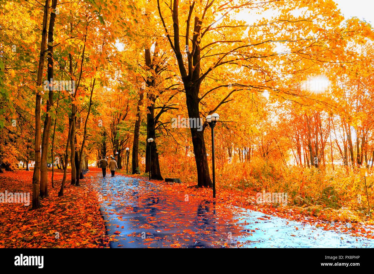 autumn landscape autumn trees