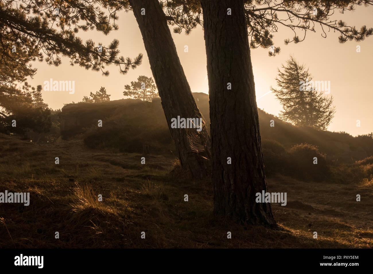 Between Trees Stock Photos Amp Between Trees Stock Images