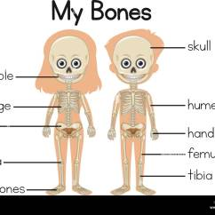 Rib Cage Bone Diagram Calvin Benson Cycle Stock Vector Images Alamy My Bones With Two Children Illustration