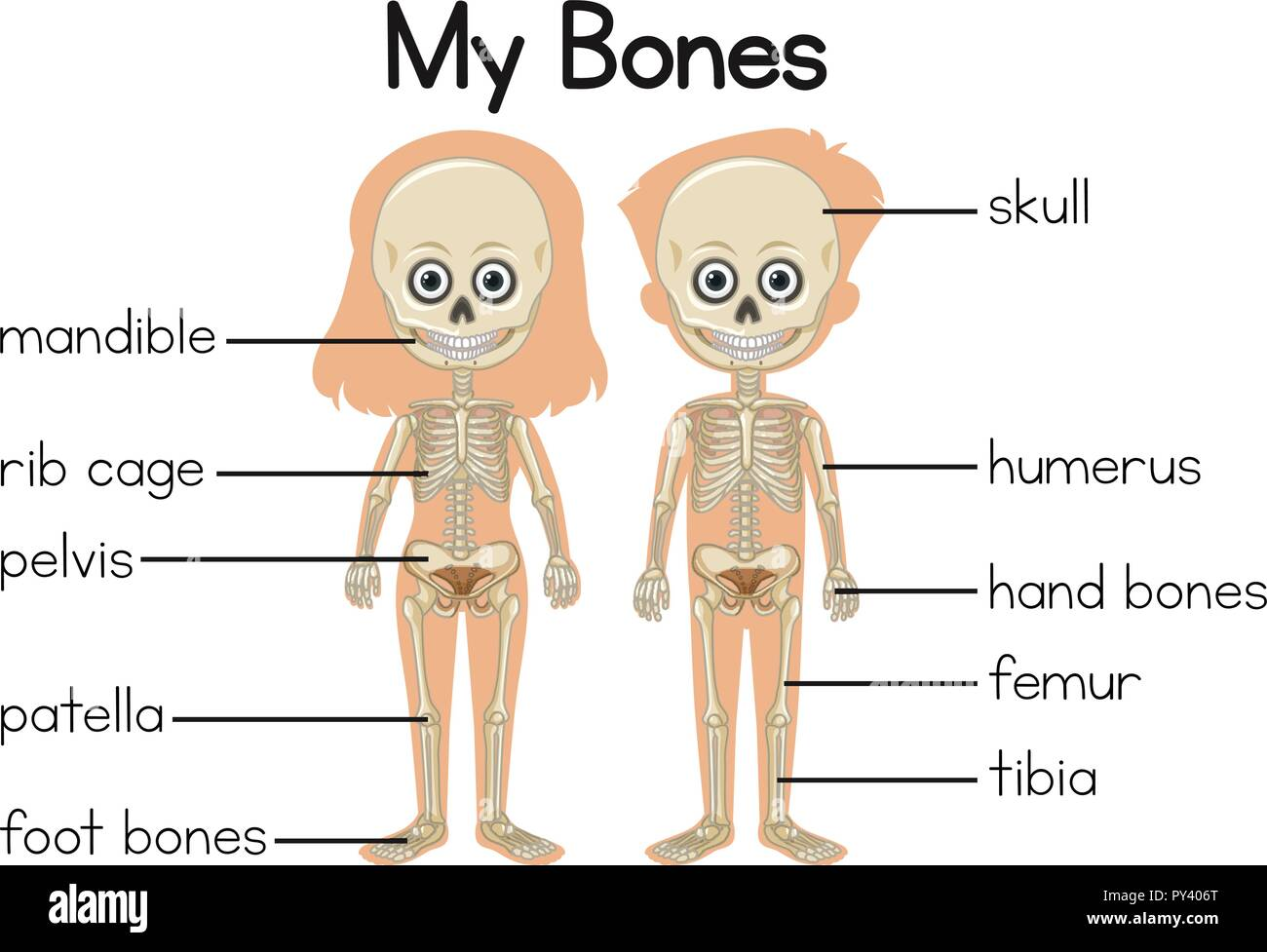 hight resolution of my bones diagram with two children illustration stock vector