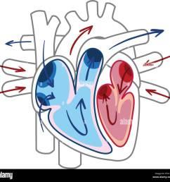 blood flow of the heart diagram illustration [ 1300 x 1245 Pixel ]