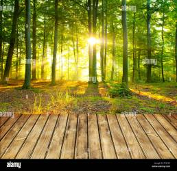 Empty wooden table and green forest in background Stock Photo Alamy