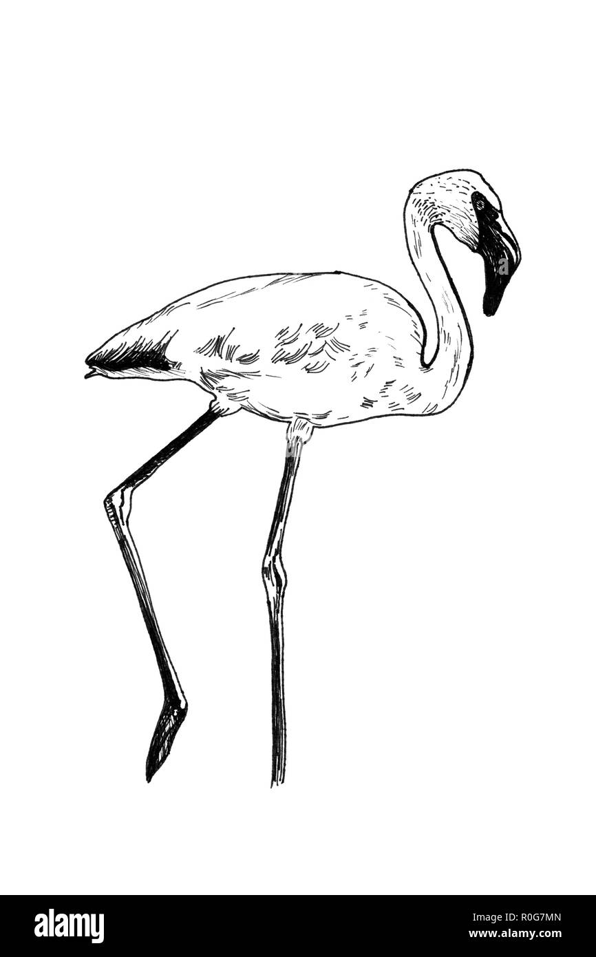pink flamingo line drawing