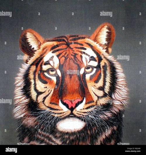small resolution of portrait of a tiger stock image