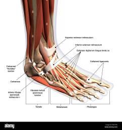 anatomical diagram of foot [ 1300 x 1390 Pixel ]
