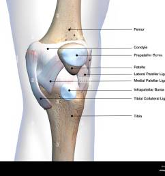 knee joint bone and connective tissue with labels  [ 1300 x 1065 Pixel ]