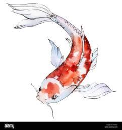 isolated goldfish illustration element watercolor set aquarelle elements for background texture wrapper pattern  [ 1300 x 1390 Pixel ]
