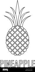 Pineapple icon Outline illustration of pineapple vector icon for web Stock Vector Image & Art Alamy
