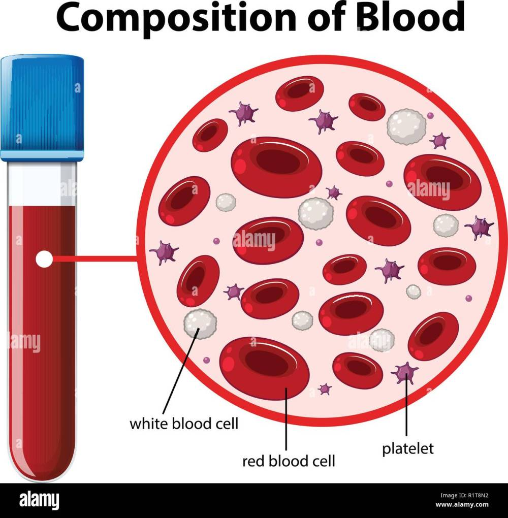 medium resolution of composition of blood diagram illustration stock image