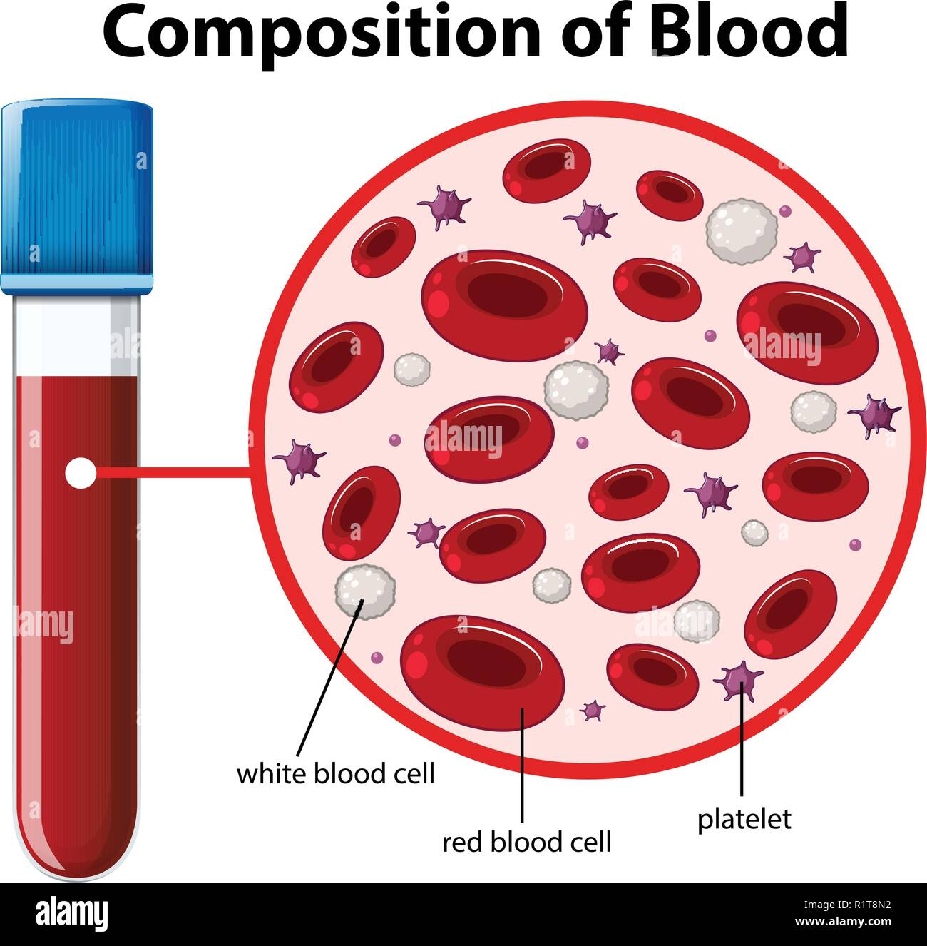 hight resolution of composition of blood diagram illustration stock image
