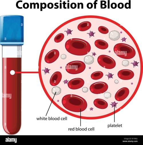 small resolution of composition of blood diagram illustration stock image
