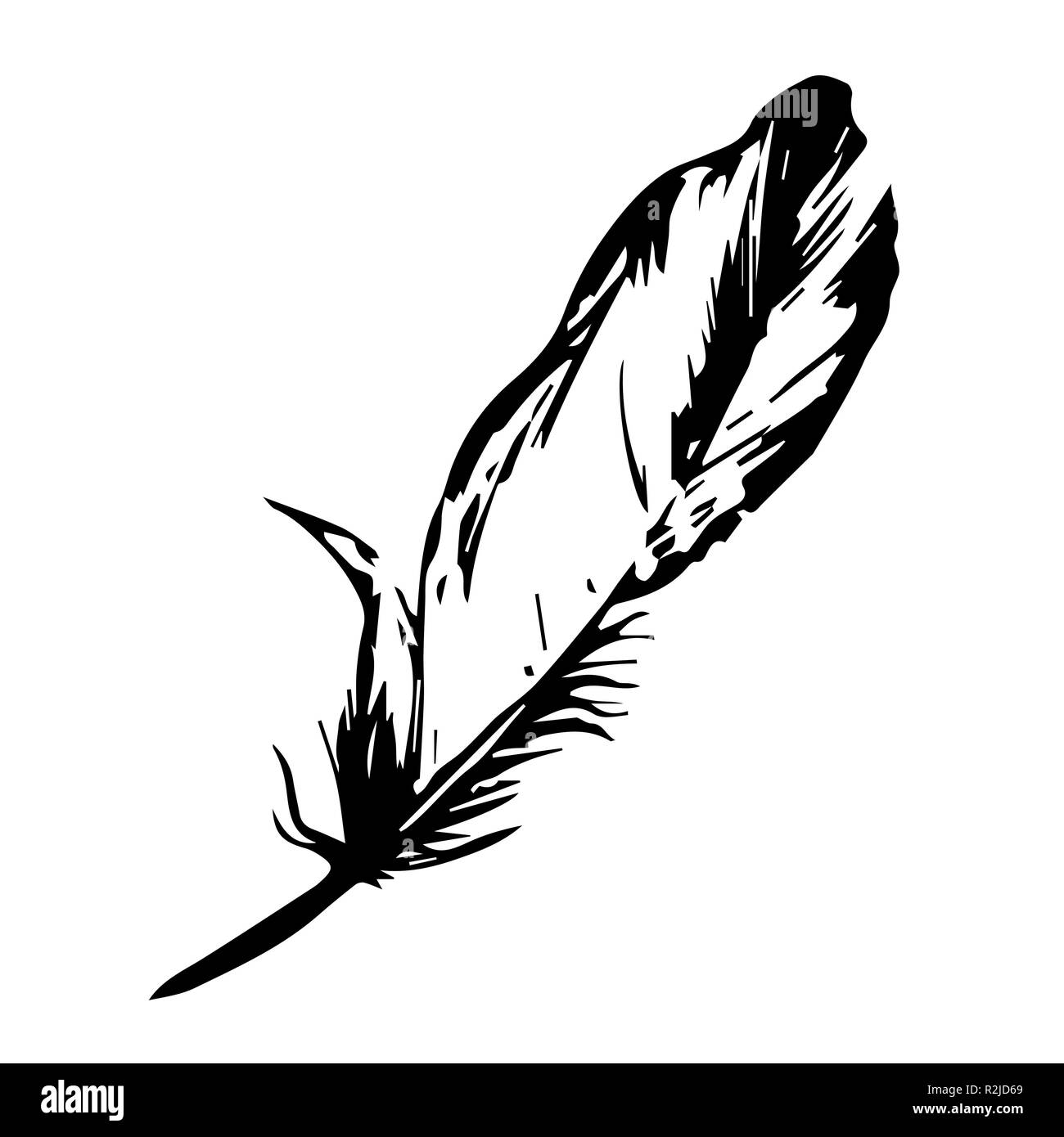 feather vector illustration one