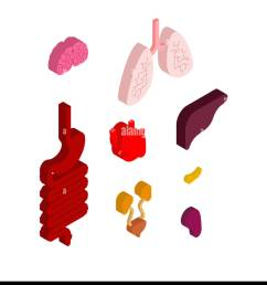 internal organ isometric set 3d anatomy of human body heart and brain liver and stomach esophagus and pancreas kidney and spleen lungs systems [ 1165 x 1390 Pixel ]