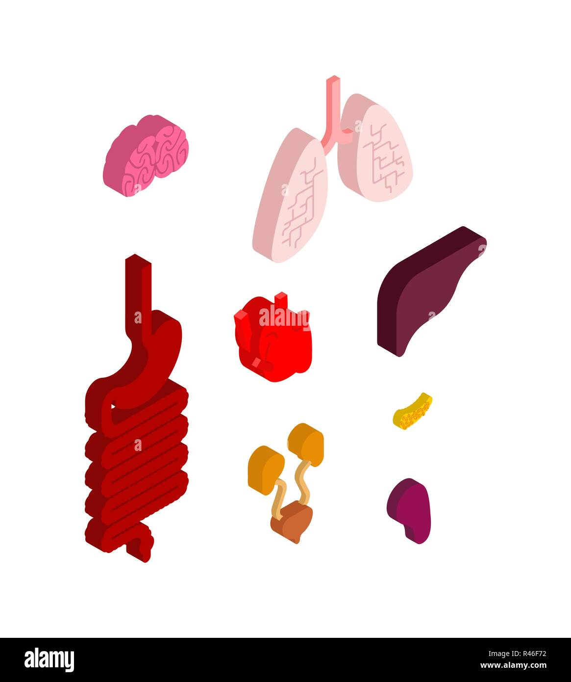 hight resolution of internal organ isometric set 3d anatomy of human body heart and brain liver and stomach esophagus and pancreas kidney and spleen lungs systems