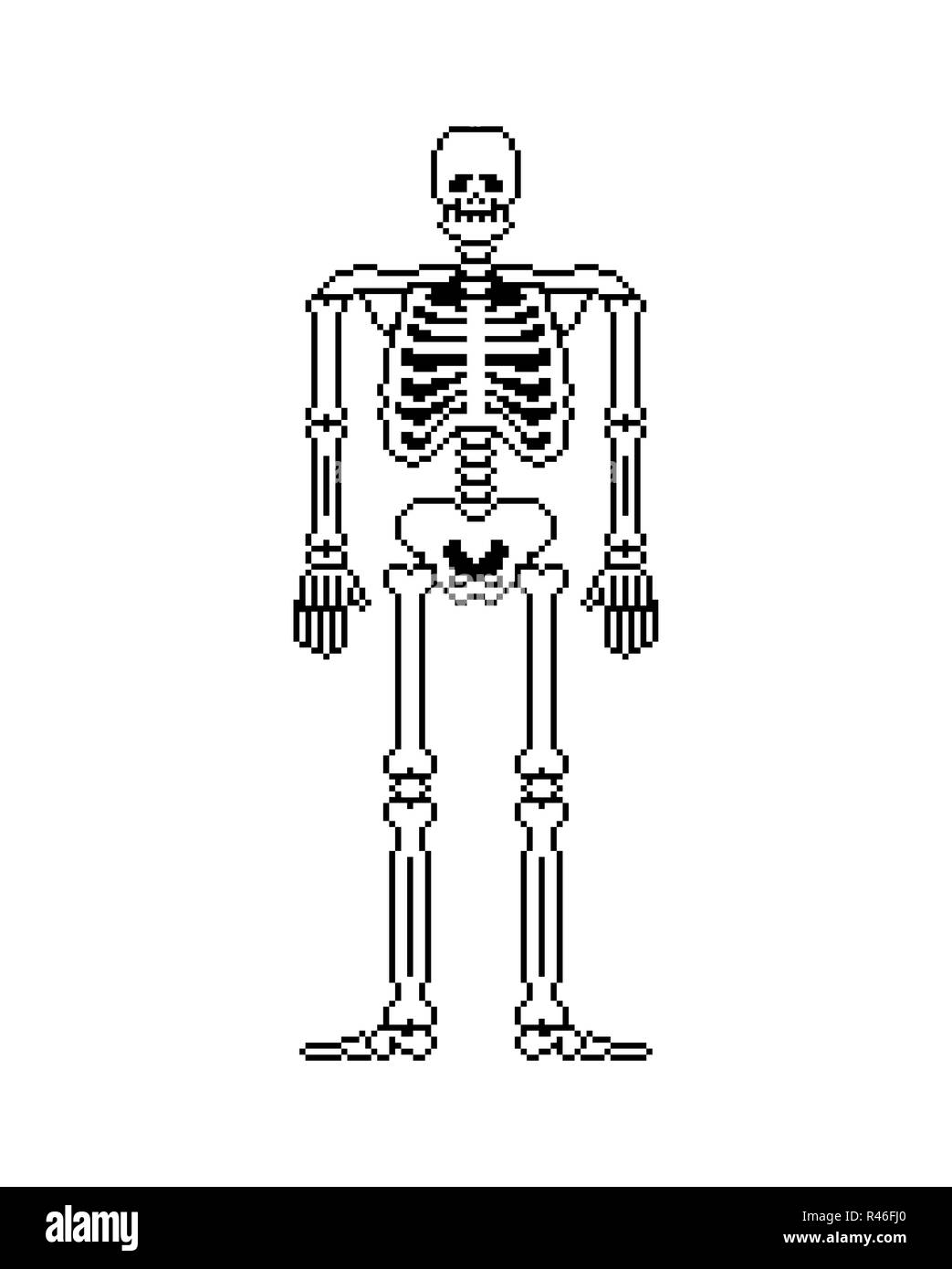 hight resolution of skull and bones anatomy 8 bit pixelate pelvic bone and ribs