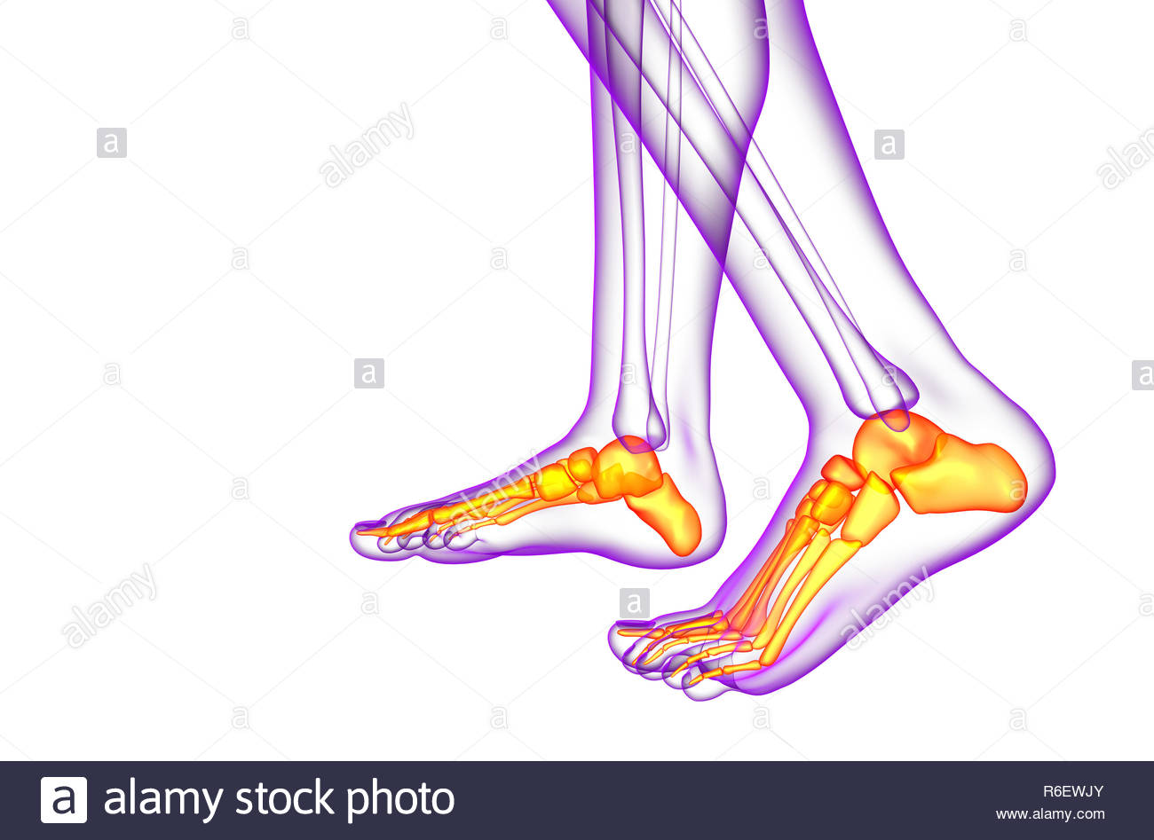 hight resolution of 3d render medical illustration of the foot bone side view