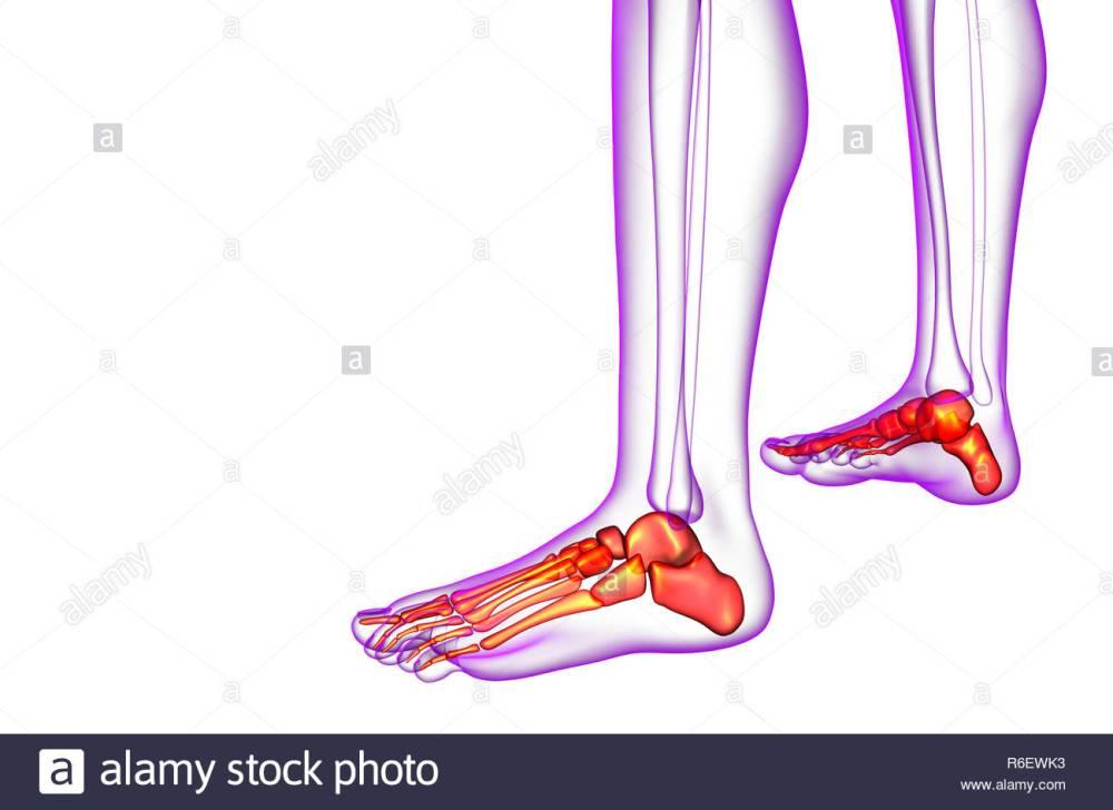 medium resolution of 3d render medical illustration of the foot bone side view
