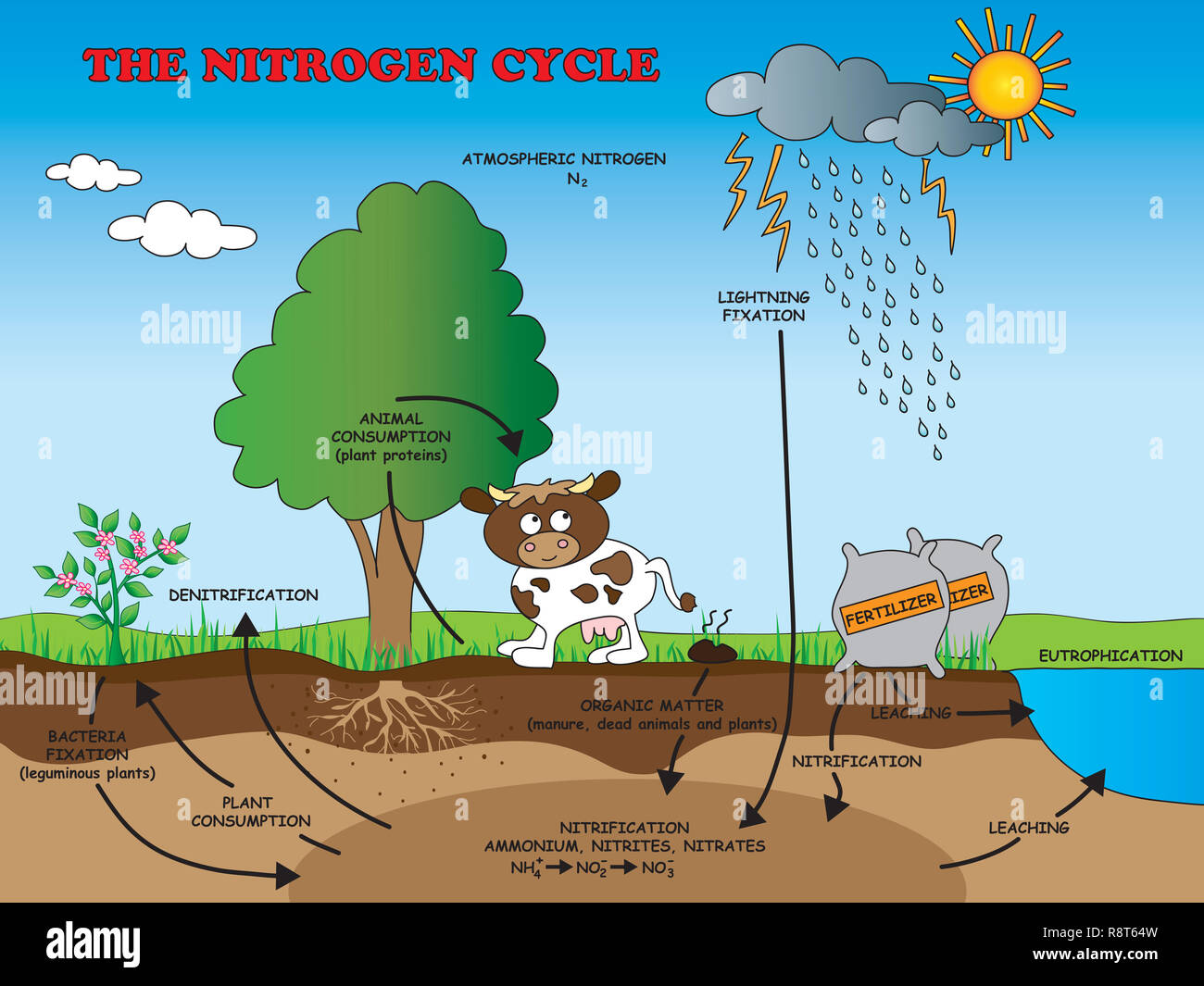 Nitrogen Cycle Stock Photos Amp Nitrogen Cycle Stock Images