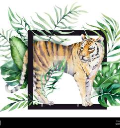 watercolor tiger illustration and summer paradise tropical leaves print palm plant and flower isolated o [ 1300 x 1069 Pixel ]