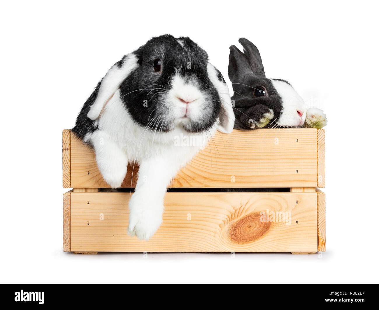 Black And White Rabbit Pictures Stock Photos Amp Black And