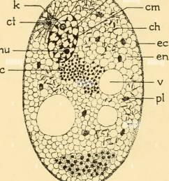 embryology of insects and myriapods the developmental history of insects centipedes and millepedes from egg desposition to hatching  [ 1062 x 1390 Pixel ]