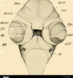 development of the chick an introduction to embryology birds embryology 216 the development of the chick [ 1228 x 1390 Pixel ]